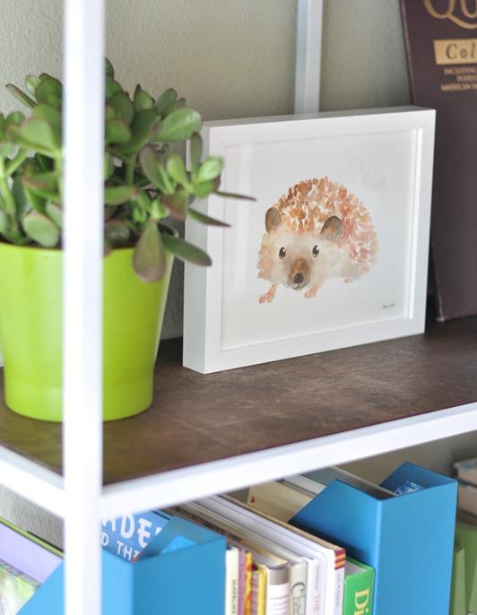 hedgehog and dark shelves