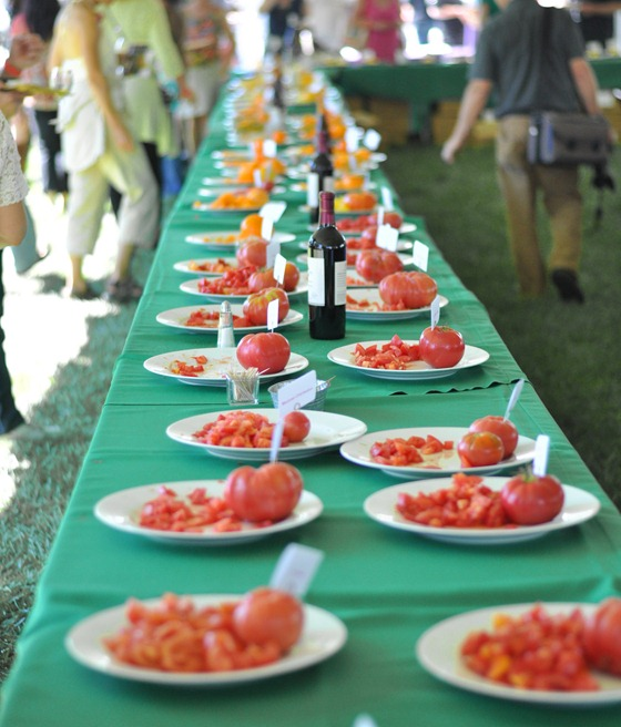 tomato samples on table