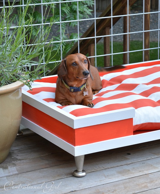 dachshund on pet bed