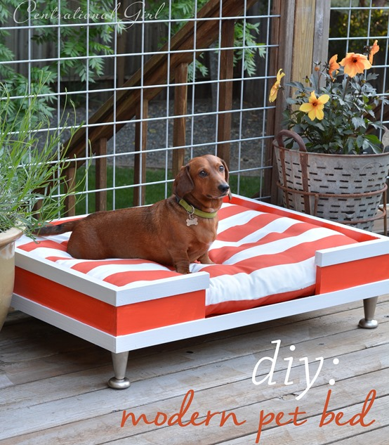 diy modern pet bed