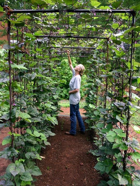 green bean trellis
