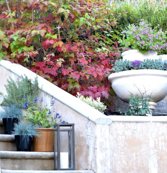 planting bed and fountain