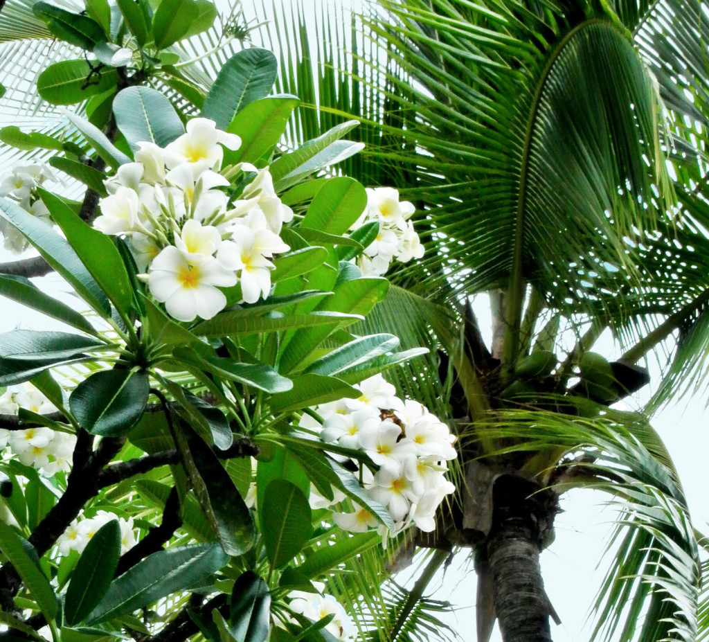 plumeria and palm tree