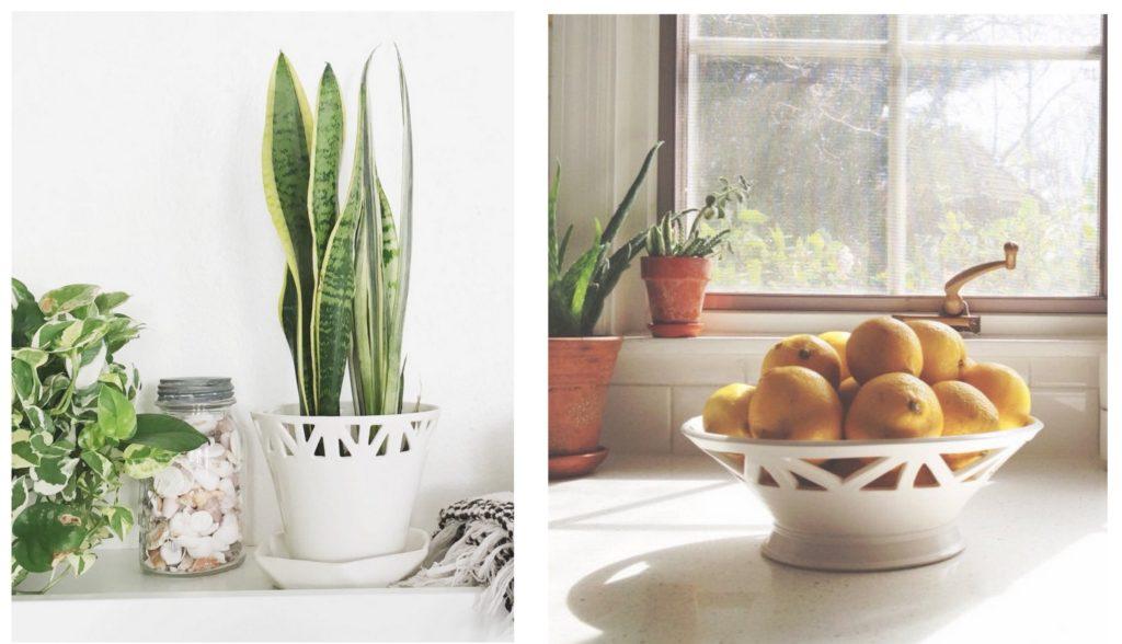 convivial productions planter