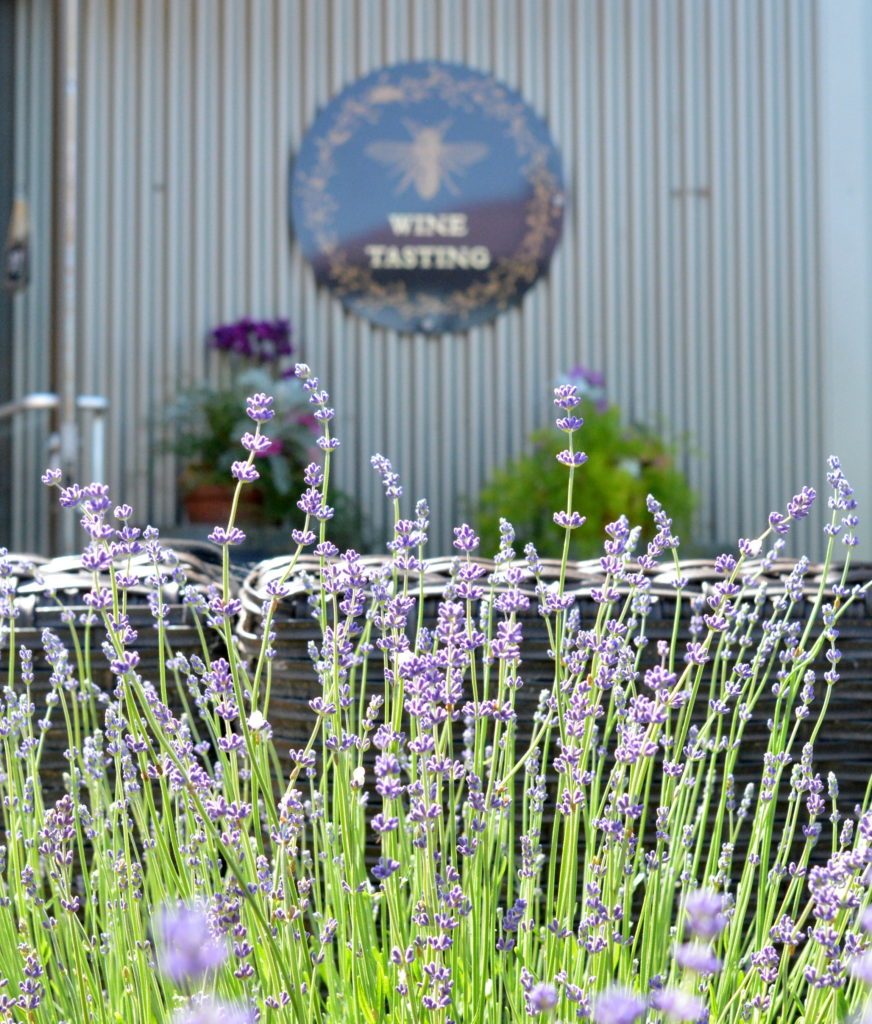 french lavender wine country