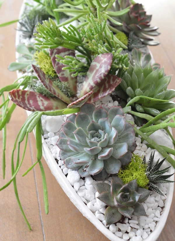 succulents boat planter