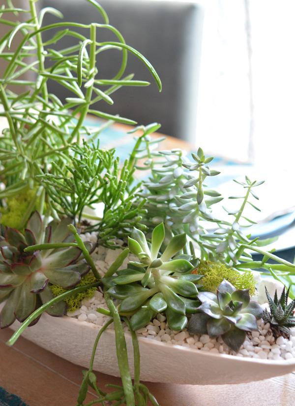 succulents up close