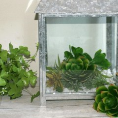 Make a Beautiful Succulent Terrarium for Under $25