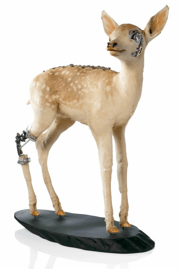 Lisa Black's Fawn, from her Fixed series.  Taxidermy, metal and clockwork parts, 2007