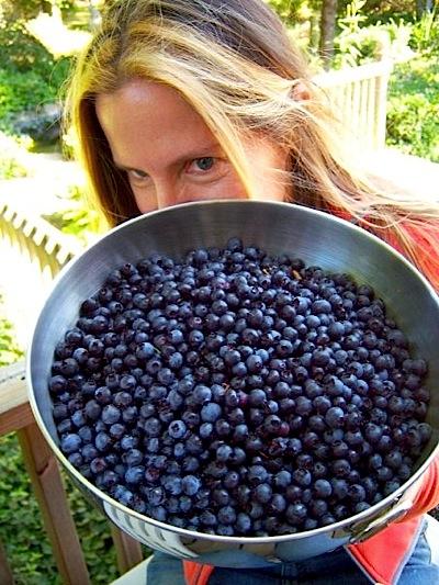 organic blueberries gail potocki michigan