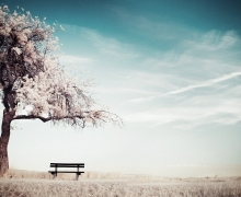 cherry-blossoms-by-the-bench-16_www.FullHDWpp.com_