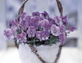 Petit bouquet de violettes, moment de partage