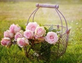 Le bouquet du dimanche #13 : un peu de tout, de rien et surtout un petit bouquet à partager en toute amitié pour célébrer le week-end :)
