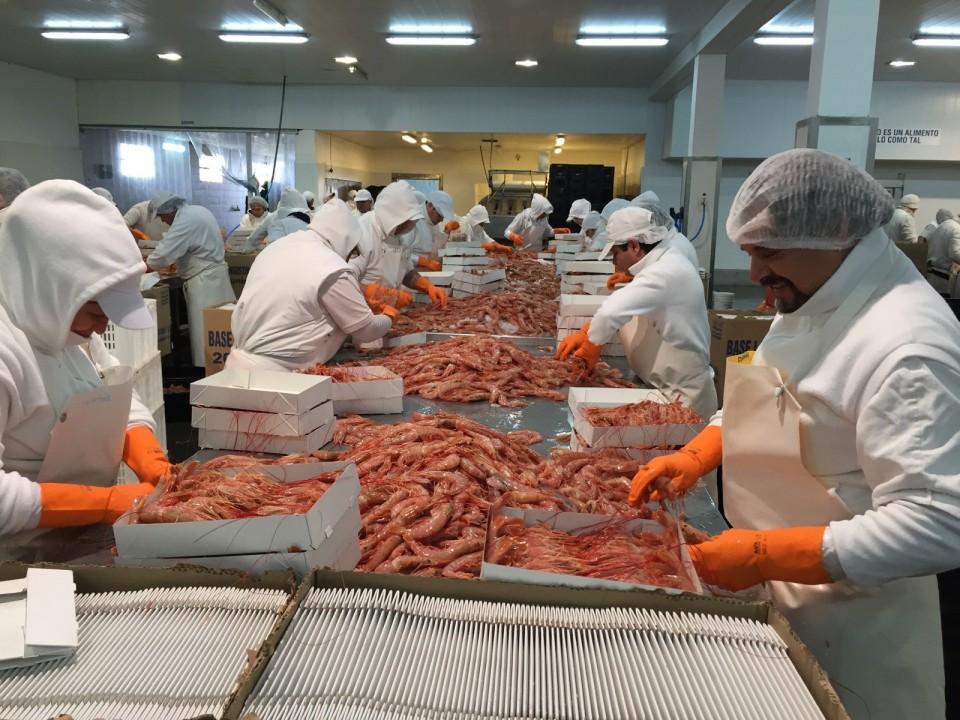 Inquietud en las empresas por volver a exportar langostino a Brasil