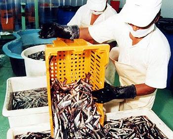 Factores climatológicos afectaron las exportaciones pesqueras de 2016