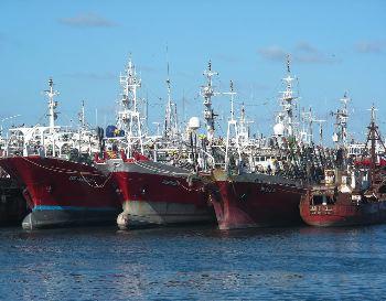Capturan 38.000 toneladas de calamar hasta la octava semana de la temporada