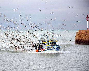 Nuevas tecnologías de pesca son 'una espada de doble filo'
