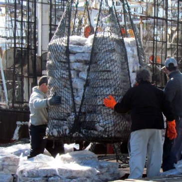 El calamar apuntala los desembarques en Mar del Plata