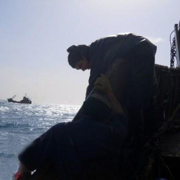 La FAO quiere rastrear el pescado desde el mar hasta la mesa para frenar las capturas ilegales