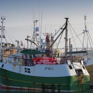 ¿Ha caído la UE en la «sobrerregulación» al tratar de combatir la «sobrepesca»?