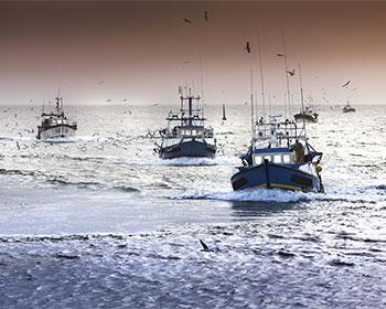 ONG aplauden nuevo reglamento de la UE para flota pesquera exterior
