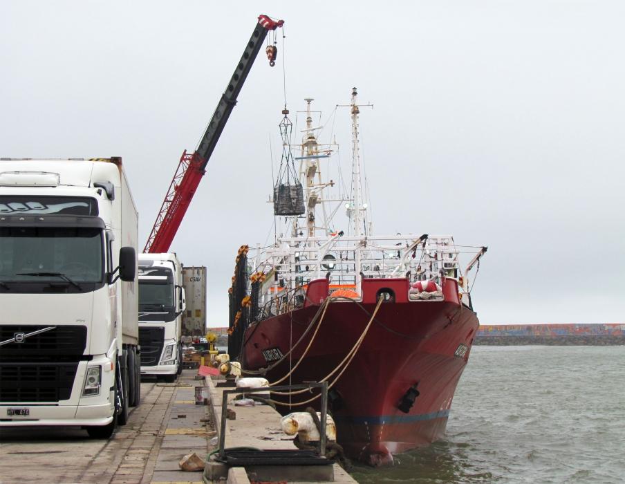 Mar del Plata volvió a concentrar los mayores volúmenes de calamar