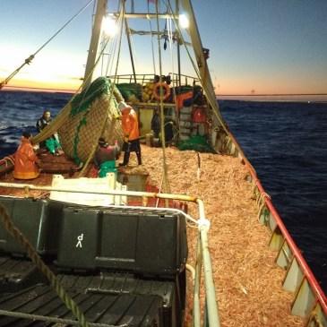 Langostino: el Consejo modifica límites de captura por embarcación