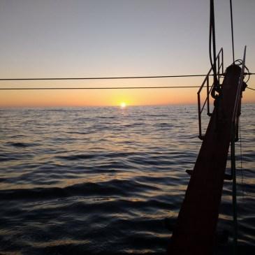 Australia: acidificación oceánica desorienta a las larvas de peces