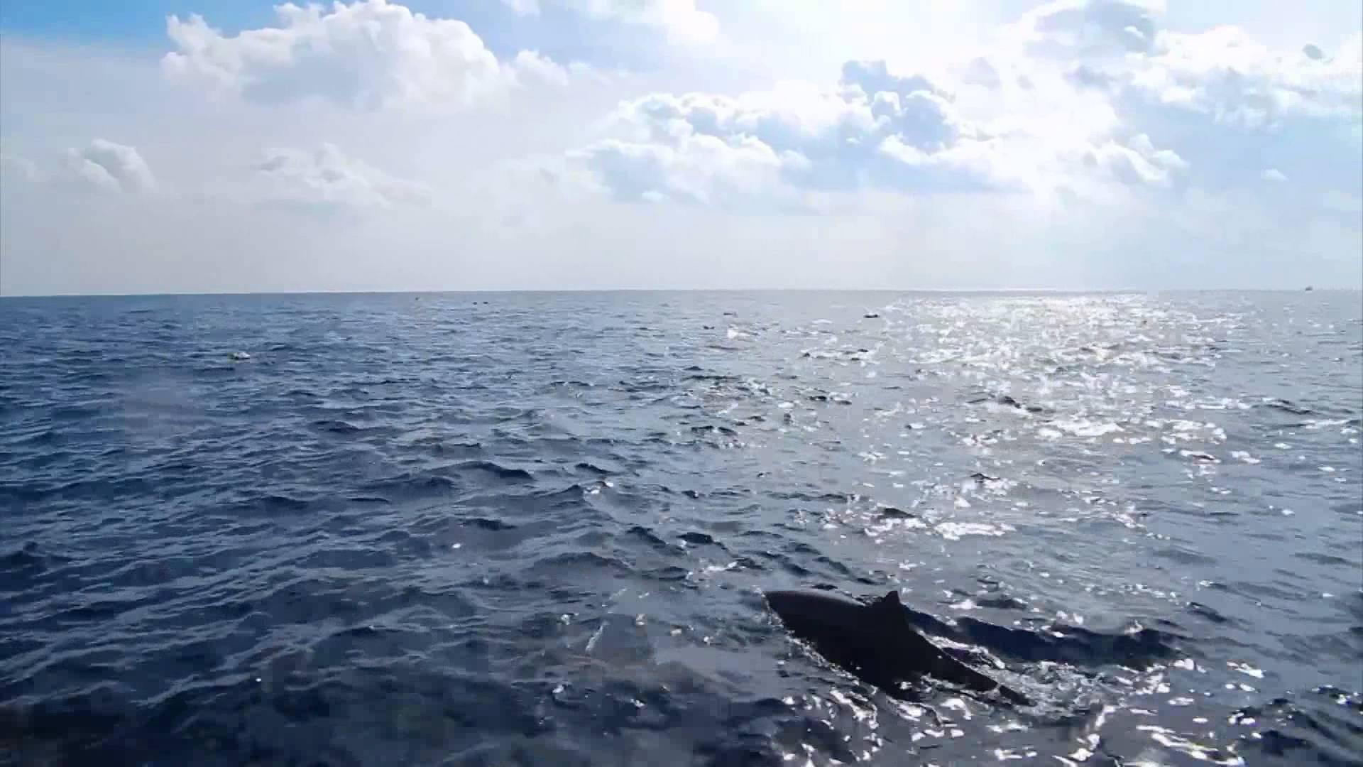 Avances hacia un acuerdo internacional para conservar la biodiversidad en alta mar