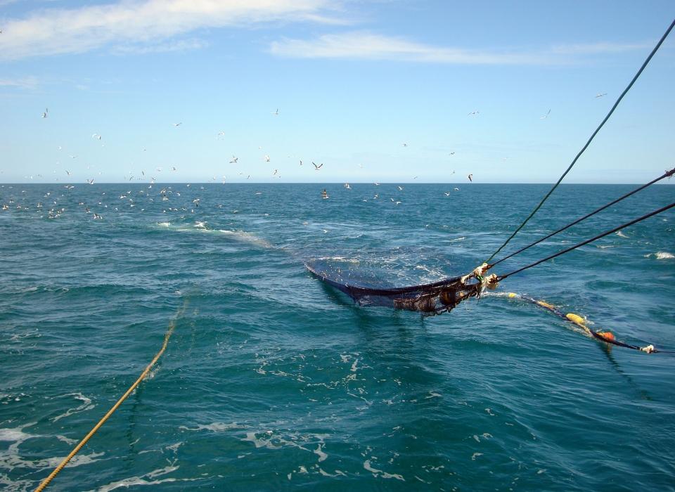 Pesca Internacional