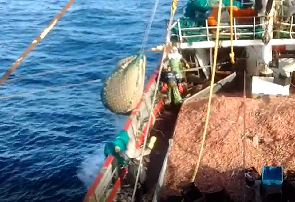 Salvar los mares: el desafío que enfrenta la industria pesquera