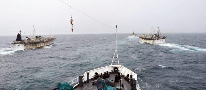 Pesca de calamar en el Atlántico sur: la amenaza china