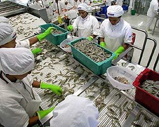 Brasil: exportaciones pesqueras caen 34 %, afectadas por suspensión de envíos a la UE