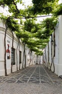 Bodega, Gonzalez Byass, Jerez, Cádiz, calles emparradas,