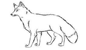الشكل الثعالب طرق سهلة لرسم الثعلب بقلم رصاص