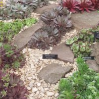 Alpine Garden Society On Twitter Getting Up Close With Some Of The pertaining to 28+ How To Plant Up An Alpine Trough