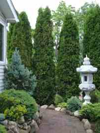 Asian Garden With Conifer Trees Different Types Of Gymnosperm for 23+ Dwarf Conifers Offer Big Solutions