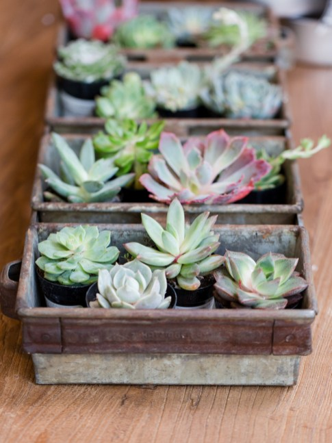 How To Host A Succulent Garden Party Jenny Cookies intended for ucwords]
