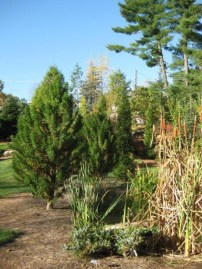 Mission Oaks Gardens Conifer Grove Zanesville Ohio intended for 23+ Dwarf Conifers Offer Big Solutions