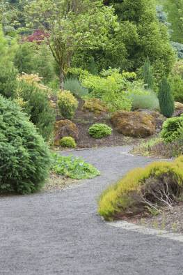 New Growth On The Plants And Trees In The Conifer Garden Stock in 23+ Dwarf Conifers Offer Big Solutions