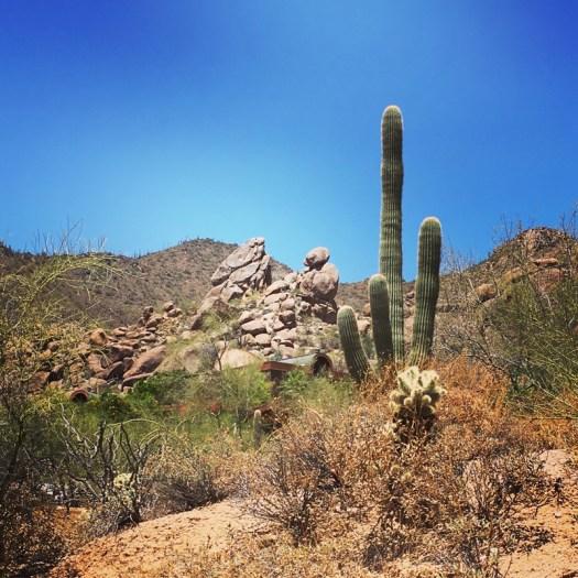 Saguaro - Desert Landscape
