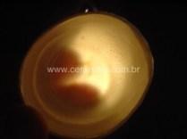 porcelana com translucidez