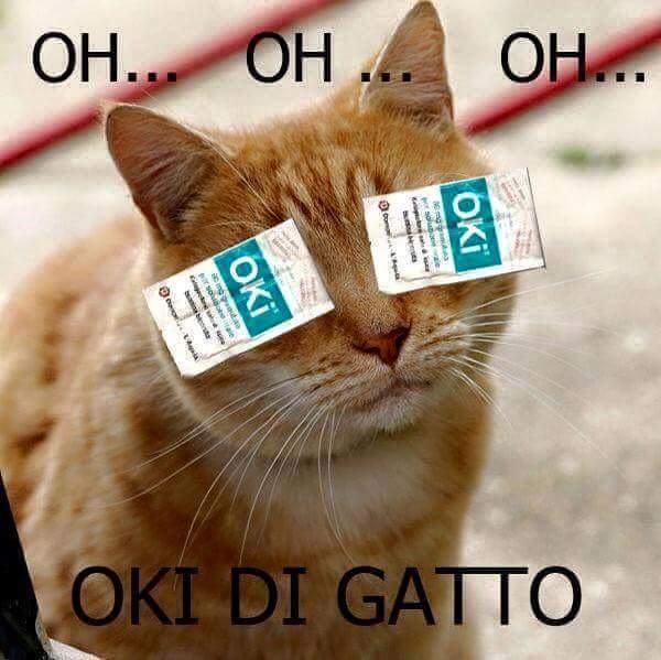oh... oh... oh... oki di gatto