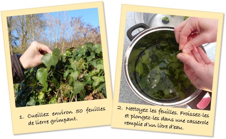 ceuillir et nettoyer les feuilles de lierre