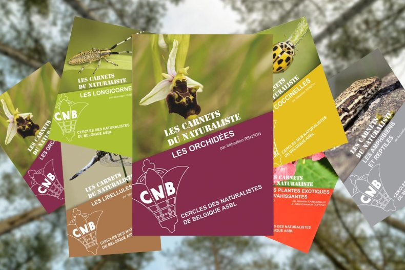 nouveau carnet du naturaliste sur le thème des orchidées