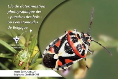 Clé de détermination photographique des punaises des bois de Belgique