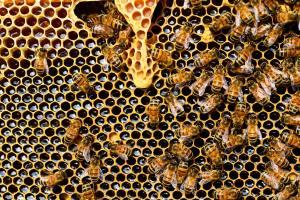 Panal de abejas por Pixabay
