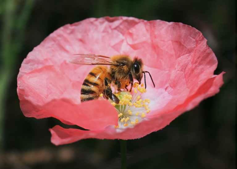 Abejas en Flor por Casia Charlie