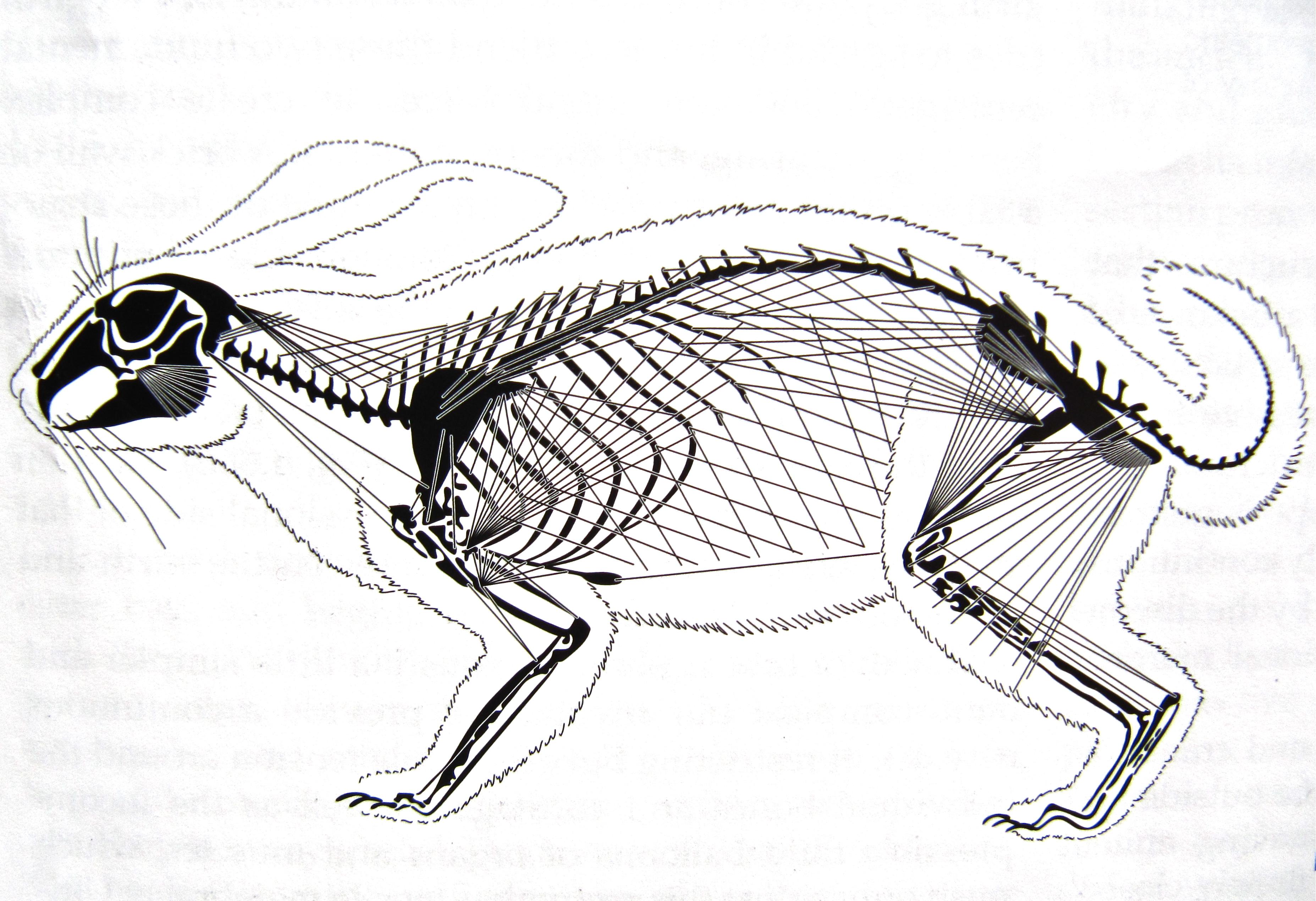 Cerebrovortex