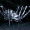 Örümcek Geldi, Hoş Geldi